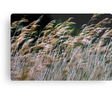Reeds At Salthouse Marsh Metal Print