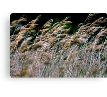 Reeds At Salthouse Marsh Canvas Print