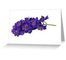 Delphinium Greeting Card