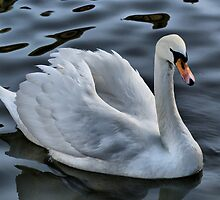 Graceful Beauty by Sandra Cockayne