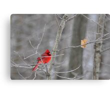 The elusive male cardinal Canvas Print