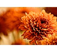 You painted by brush I painted by Camera... Photographic Print
