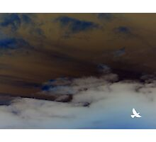 hope (clouded sky, white bird flying free) Photographic Print