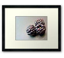 Colourful blackberries Framed Print