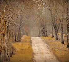 the road less travelled by alinecaldwell