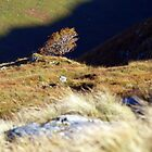 Rowan Tree above Loch Nevis by WillH