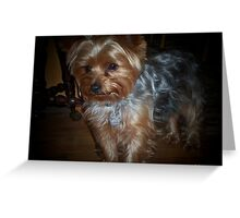 Buddy - A Yorkshire Terrier Greeting Card