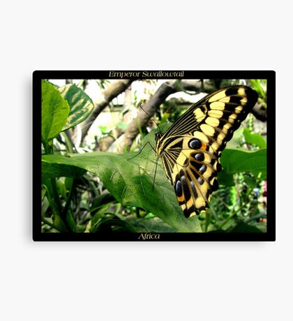 Butterfly (Africa) ~ Emperor Swallowtail Canvas Print