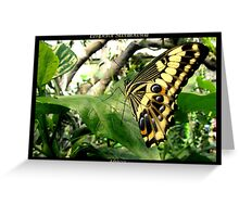 Butterfly (Africa) ~ Emperor Swallowtail Greeting Card