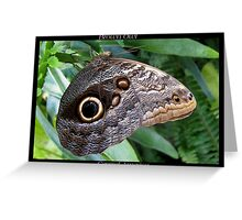 Butterfly (C. America) ~ Brown Owl Greeting Card