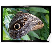 Butterfly (C. America) ~ Brown Owl Poster