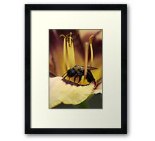 Bee on Lily Framed Print