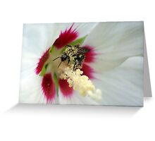 Pollen Overdose Greeting Card