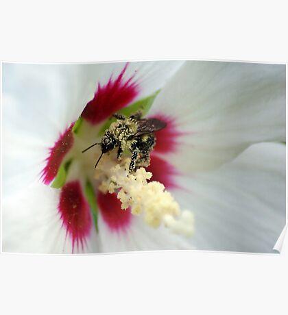 Pollen Overdose Poster