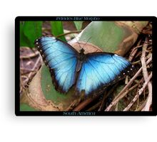 Butterfly (South America) ~ Peleides Blue Morpho II Canvas Print