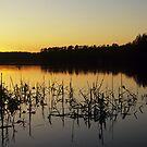 Reeds by Kasia Nowak