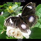 Butterfly (Asia) ~ Great Eggfly by Kimberly Chadwick