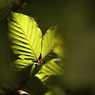 Light in the Shadows by Tracy Friesen