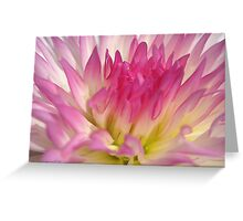 Dahlia named Star Elite Greeting Card