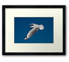 Flying Gull Framed Print