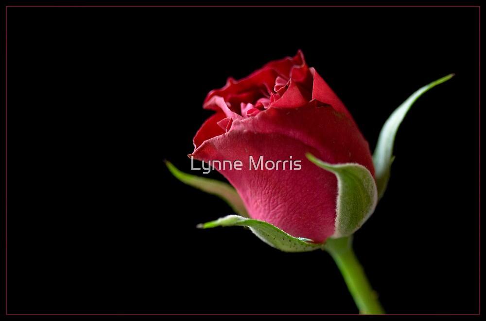 Love by Lynne Morris