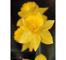 Daffodil named Exception Photographic Print