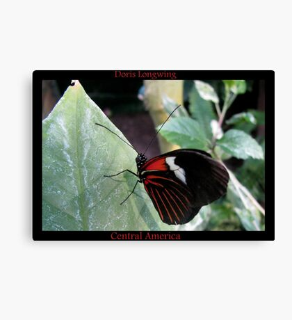 Butterfly (Central America) ~ Doris Longwing Canvas Print