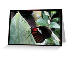 Butterfly (Central America) ~ Doris Longwing Greeting Card