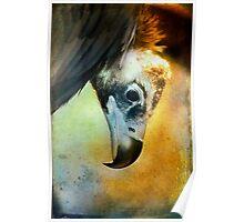 Cinerous Vulture Portrait Poster