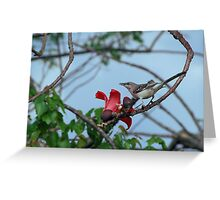 Mockingbird on a cotton tree Greeting Card