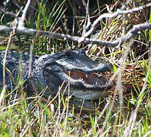 Gator by Carol Bock