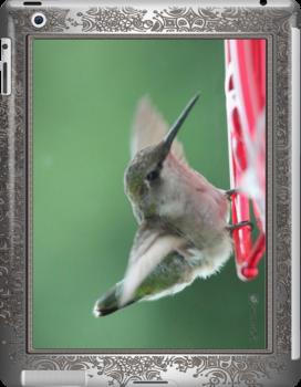 Female Ruby-Throated Hummingbird by JMcCombie