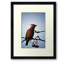 Bohemian Waxwing in Mountain Ash Framed Print
