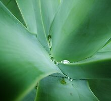 Dew on the Green by Andrew Woodman