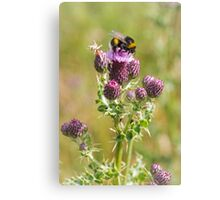 Busy Bee on Thistle Canvas Print