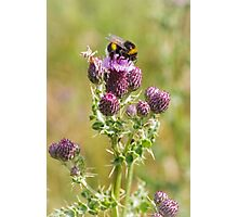 Busy Bee on Thistle Photographic Print