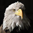 Sam Eagle 1 by Jeanie93