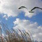 Bird In Flight  in a Winter Sky by daphsam