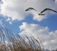 Bird In Flight  in a Winter Sky by daphsam