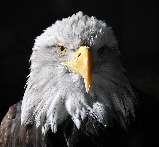Sam Eagle 5 by Jeanie93