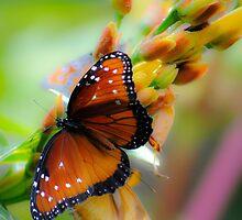Monarch 1 by Jeanie93