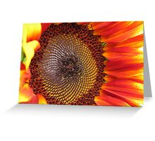 Sunflower from the Color Fashion Mix Greeting Card