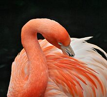Flamingo 4 by Jeanie93