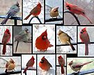 Cool Cardinals by WalnutHill