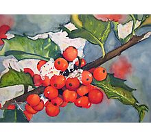 Holly Berries in the Snow Photographic Print