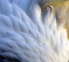 Ivory Plumes by Sue  Cullumber