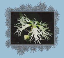 Dianthus Superbus - White Kids Clothes