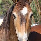 wild pony by StaceyH