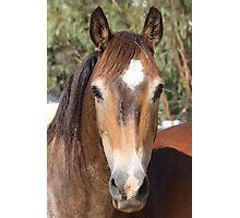 wild pony Photographic Print