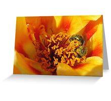 Portulaca in Orange Fading to Yellow Greeting Card